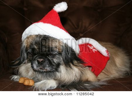 Dog Excited for Christmas
