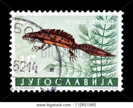 Yugoslavia 1962