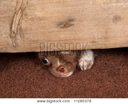 Escape do filhote de cachorro