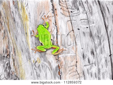 Paint frog in a plant - red-eyed tree frog