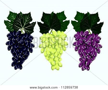 Grape clusters set