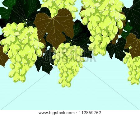 White grapes clusters background