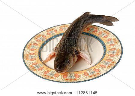 Gourmet Sea Fish Spigola Seabass