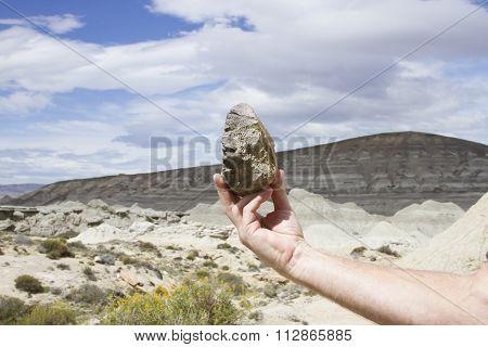Dinosaur Bone Fragment, La Leona Petrified Forest, Argentina