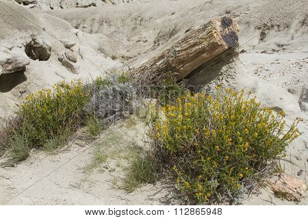 Fossils And Flowers At La Leona Petrified Forest, Argentina