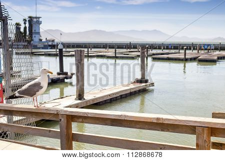 Seagull Bird Sitting On Top Of The Fence Rails In San-francisco Bay