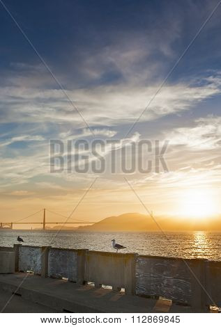 Beautiful Tranquil Seagull Sitting On Railing On San-fransisco Pier Against Golden Gates Bridge . Du