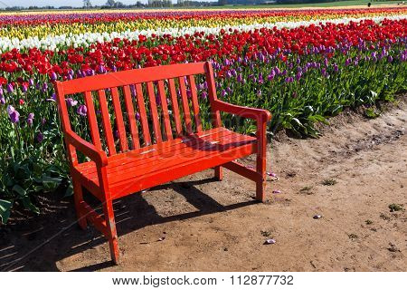 Bench By Tulips