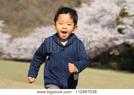 Running Japanese boy and cherry blossoms (4 years old)