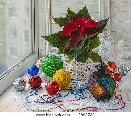 Christmas Star  (euphorbia Pulcherrima) On The Window And Christmas Decor