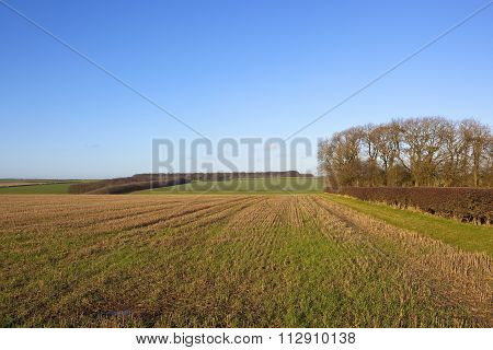 Winter Stubble Field