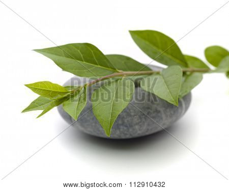 stone and leaves