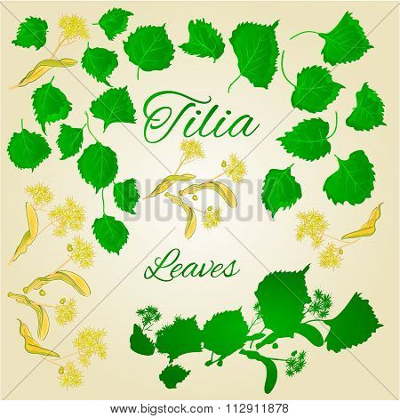 Tilia-linden Leaves With Linden Flowers Vector