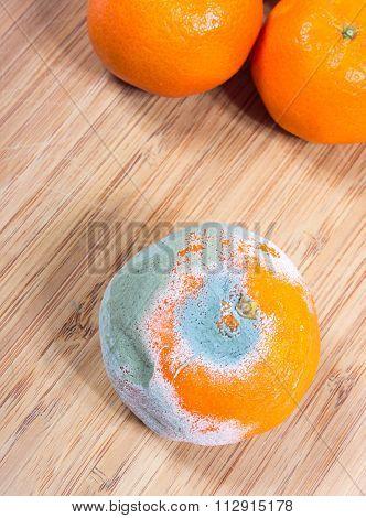 Moldy Mandarin On The Boards Kitchen.