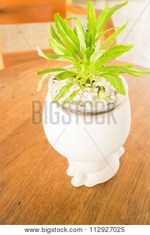Green Plant Decorated On Wooden Table