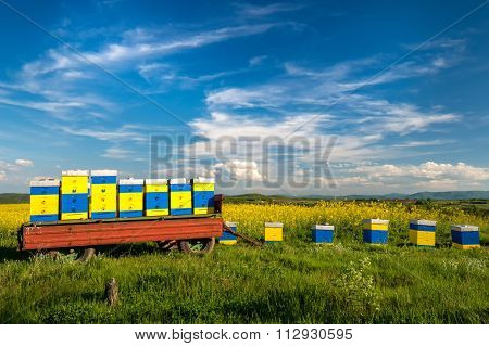 Beehives At Flowering Field Of Colza Outdoors In Spring