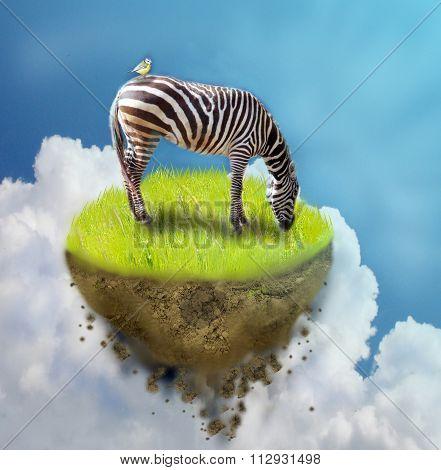 Zebra On Piece Of Ground