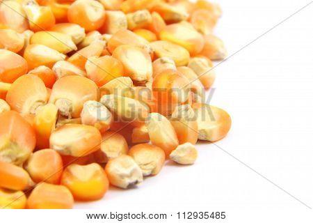 Dried corn seed