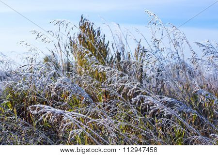 Field Of Grass Covered With Frost After Autumn Frost