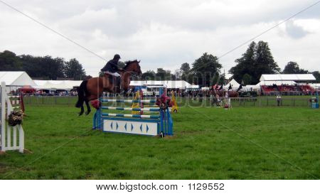 Showjumping Competor In A Showjumping Event