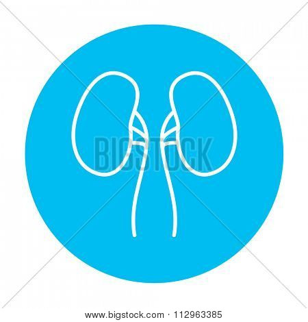 Kidney line icon for web, mobile and infographics. Vector white icon on the light blue circle isolated on white background.