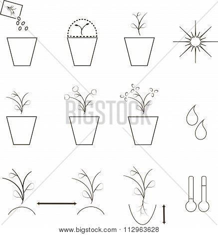 Growing seeds icons, agronomy. Thin black lines on a white background