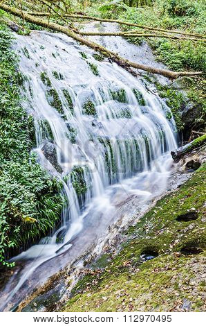 Waterfall in hill evergreen forest