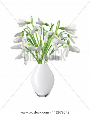 Spring Snowdrops In Vase Isolated On White