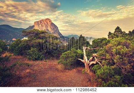 Beautiful Summer Sunset In Forest With Mountains
