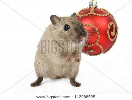 Cute Rodent By Christmas Decorations On Snow White Background