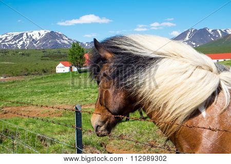 Horse and farm in Iceland