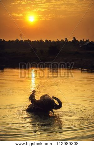Mahout Clearing Elephant In Lake On Sunset.