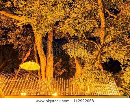 Holy Bo Tree In Anuradhapura