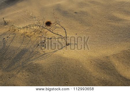 The Southerly Winds And Sandy Flower