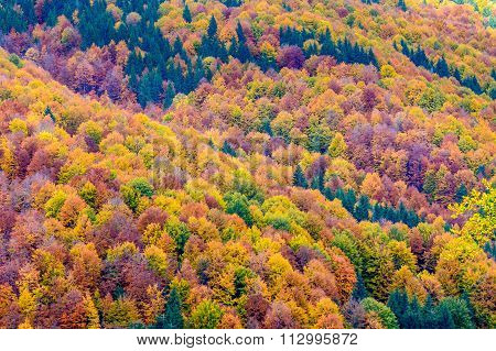 Autumn Background In Woods. Horizontal View Of A Forest, Top-side Of A Mountain, In A Sunny Autumn D