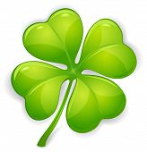 stock photo of four leaf clover  - Four leaf clover isolated on white vector illustration for St - JPG