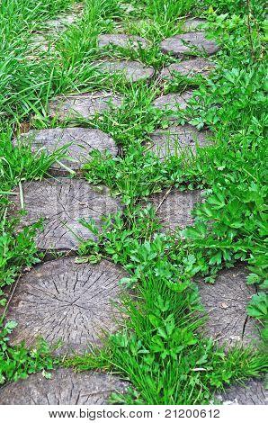 Wooden Stumps Foot Way