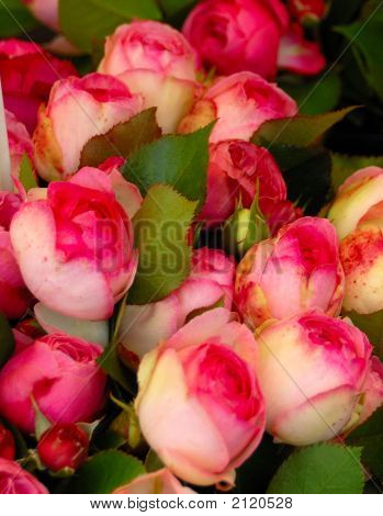 Beautiful Roses In An Outdoor Market