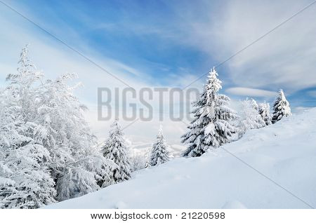 Winter Calm Mountain Landscape With Beautiful Fir Trees On Slope