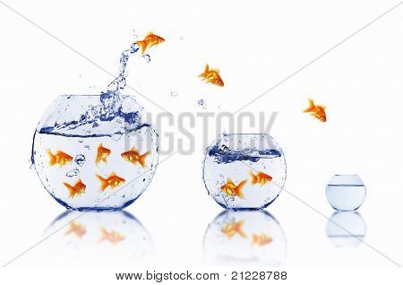 many gold fish together as symbol of teamwork
