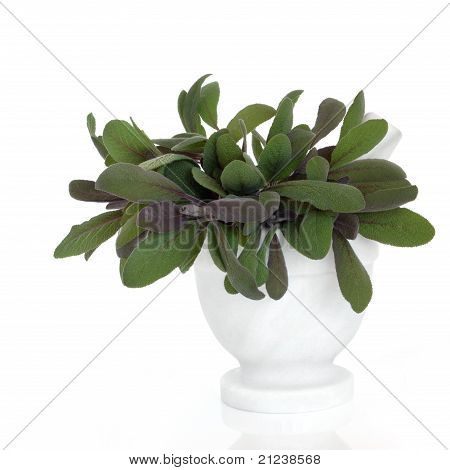 Sage Herb Leaves