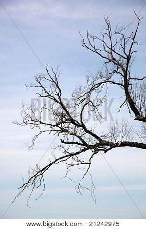 Rama de árbol muerto contra el cielo azul