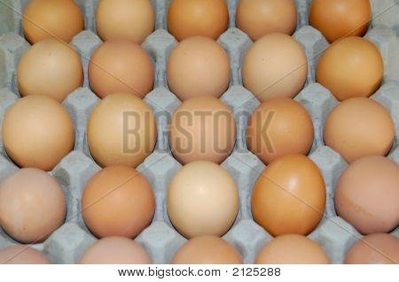 Tray Of Eggs 2