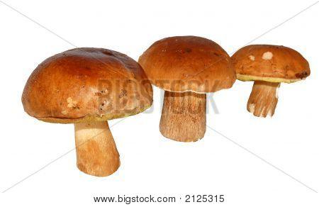 Three Mushrooms
