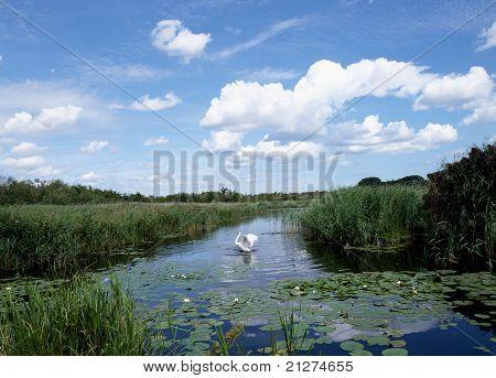 Swan flap