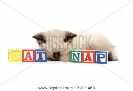 Cute Kitten Taking A Nap