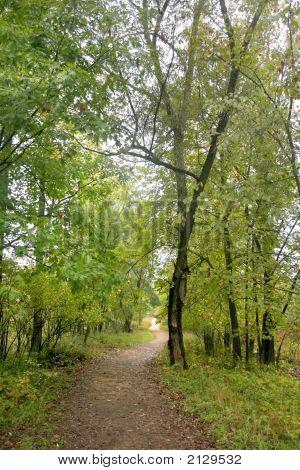 Walk Way Through Woods