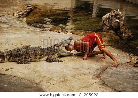 Crocodylidae Or Crocodile Show