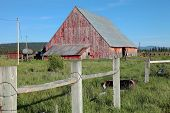 stock photo of klamath  - An old barn in route to Klamath Falls Oregon - JPG