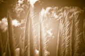 Natural Reed Abstract Background
